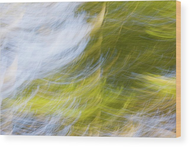 Full Frame Wood Print featuring the photograph Abstract Close Up Of Trees by Background Abstracts