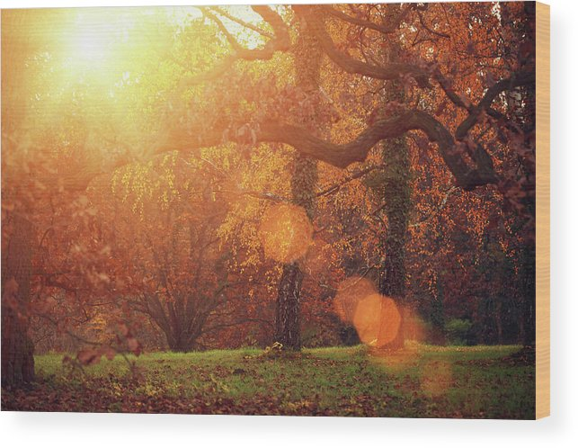 Grass Wood Print featuring the photograph Autumn Forest In Sunlight by Mammuth