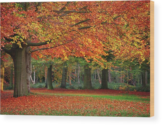 Orange Color Wood Print featuring the photograph Beautiful Autumn In Park by Lorado