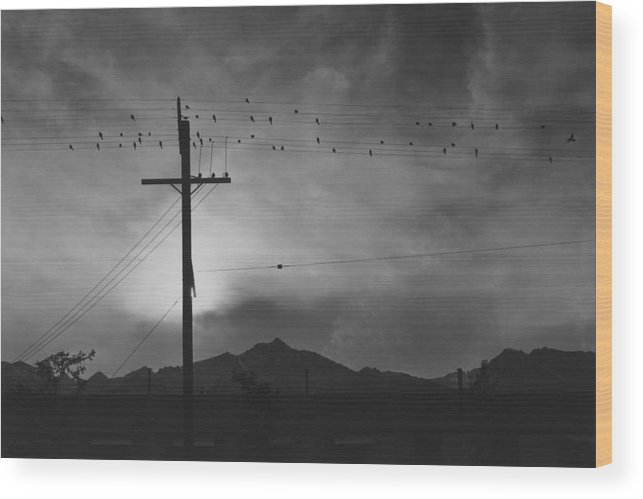 Built Structure Wood Print featuring the photograph Birds On Wire, Evening by Buyenlarge