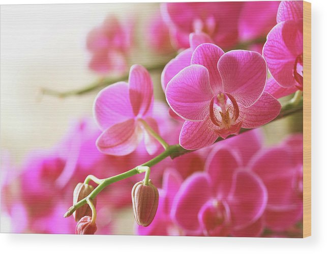 Environmental Conservation Wood Print featuring the photograph Blooming Pink Orchid On A Green Branch by Dreaming2004