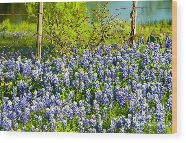 Season Wood Print featuring the photograph Bluebonnets, Texas by Donovan Reese