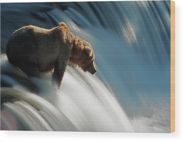 Poetry- Literature Wood Print featuring the photograph Brown Bear At Brooks Falls by Mark Newman