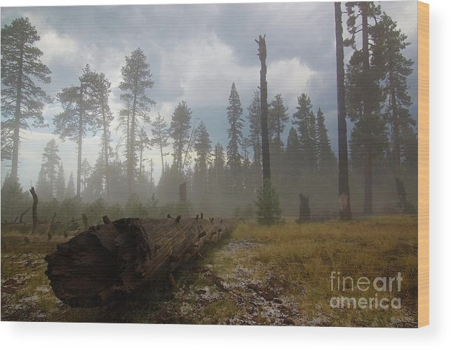Burnt Wood Print featuring the photograph Burned Trees At Lassen Volcanic by Victor De Souza