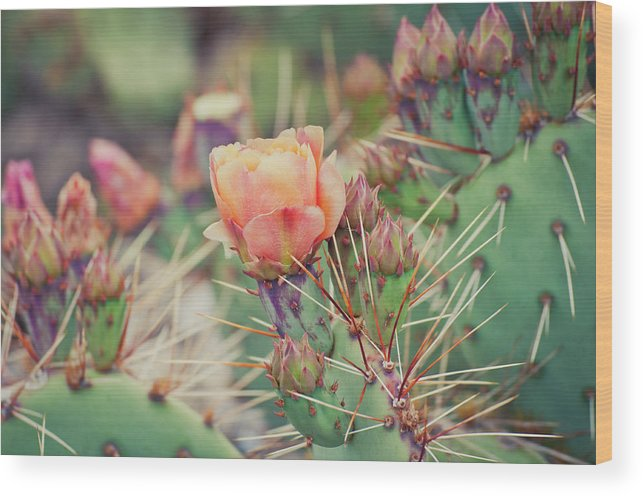 Orange Color Wood Print featuring the photograph Cactus Blossom by Harpazo hope