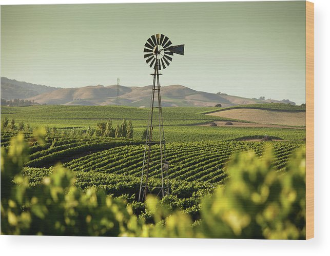 Sonoma County Wood Print featuring the photograph California Wine Country by Halbergman