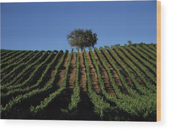 Following Wood Print featuring the photograph Californias Winegrape Growing Region Of by George Rose