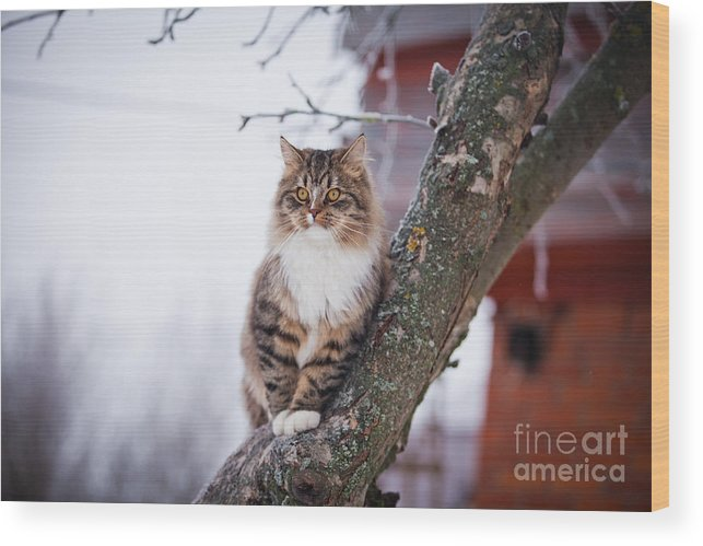 Play Wood Print featuring the photograph Cat Outdoors In The Winter Is On The by Dezy