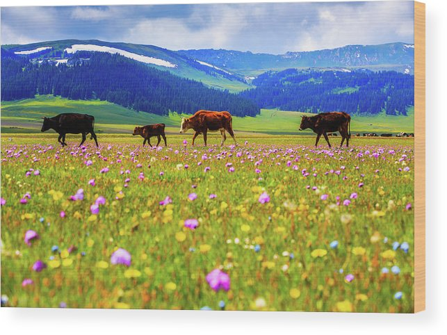 Tranquility Wood Print featuring the photograph Cattle Walking In Grassland by Feng Wei Photography