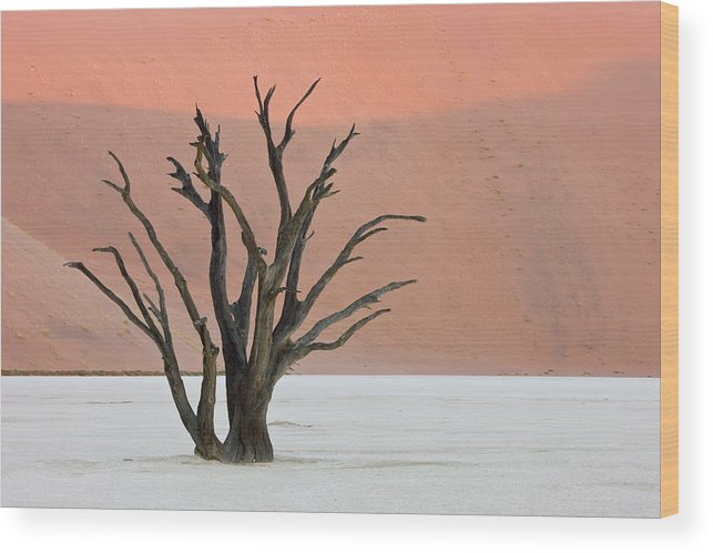 Scenics Wood Print featuring the photograph Dead Vlei Sossusvlei Africa Namibia by Thorsten Milse / Robertharding