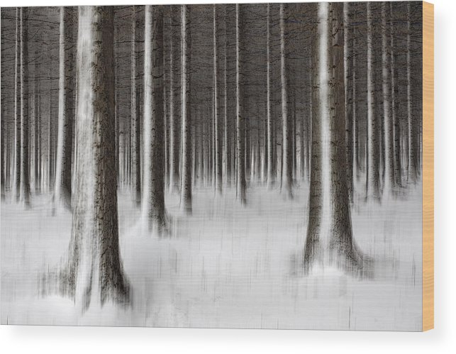 Pattern Wood Print featuring the photograph Deep In The Woods by Dragisa Petrovic