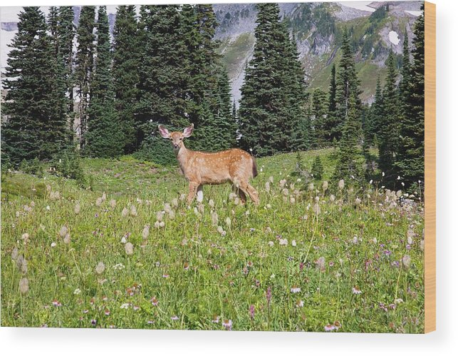 Alertness Wood Print featuring the photograph Deer Cervidae In Paradise Park In Mt by Design Pics / Craig Tuttle