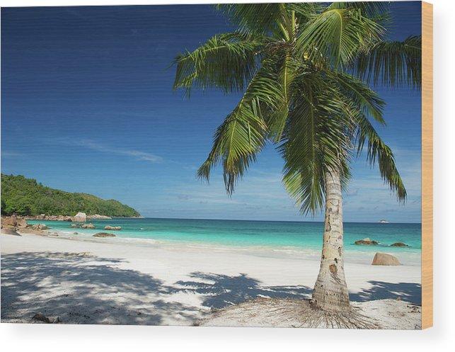 Deserted Tropical Island Dream Beach Wood Print By Peskymonkey