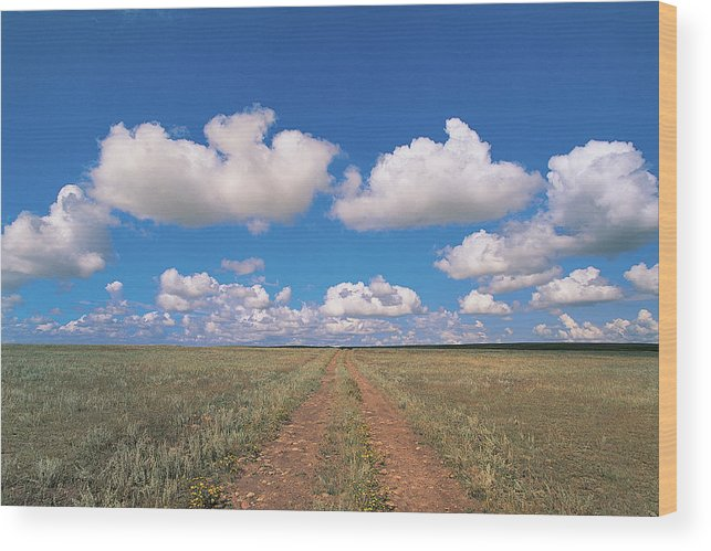 Grainy Wood Print featuring the photograph Dirt Road On Prairie With Cumulus Sky by Mimotito