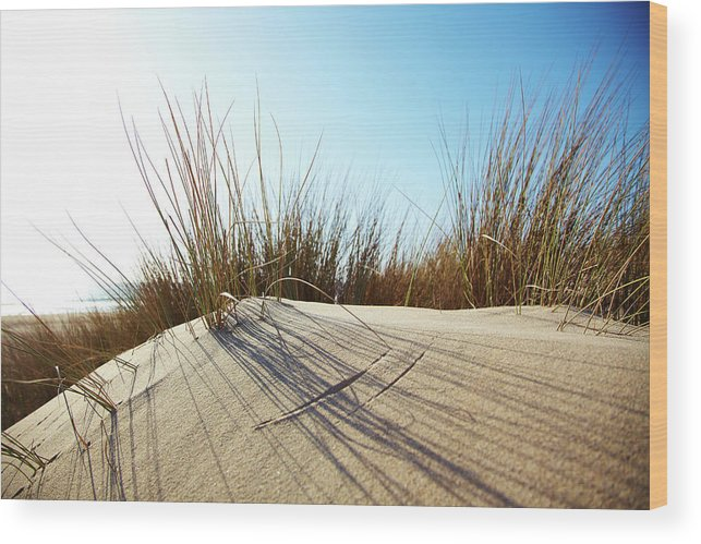 Tranquility Wood Print featuring the photograph Dune Grass On A Sand Dune At The Beach by Thomas Northcut