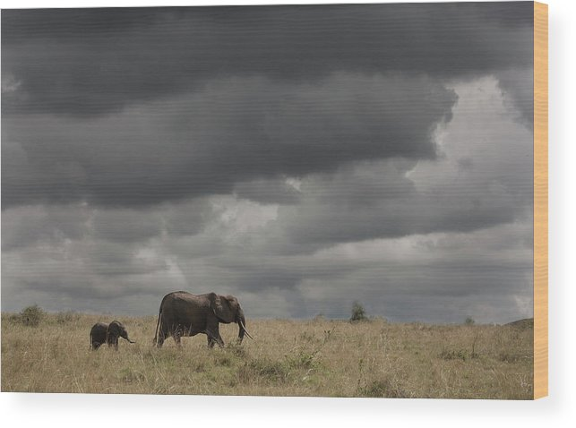 Kenya Wood Print featuring the photograph Elephant Under Cloudy Sky by Buena Vista Images