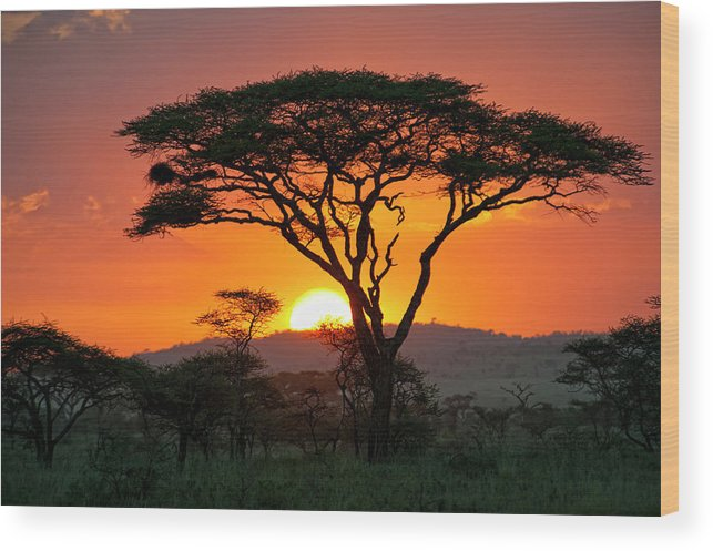Scenics Wood Print featuring the photograph End Of A Safari-day In The Serengeti by Guenterguni