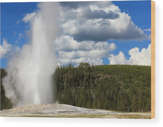 Geyser Wood Print featuring the photograph Eruption Of Old Faithful Geyser In by Pawel.gaul