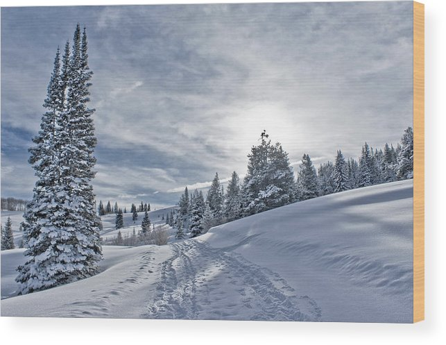 Shadow Wood Print featuring the photograph Escape From Beaver Creek by Rauch Jonathan Photographies
