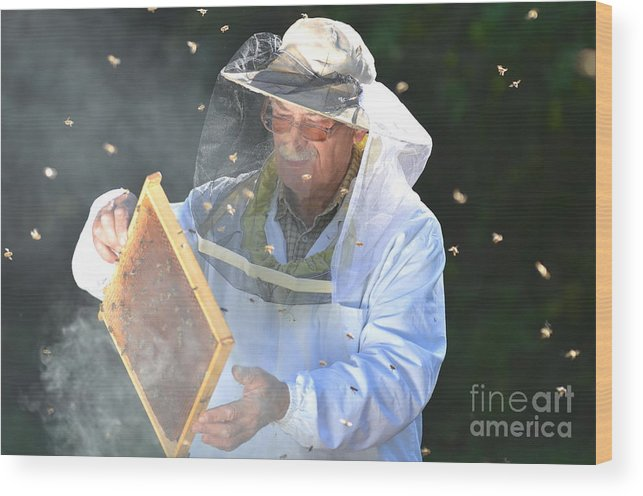 Bee Wood Print featuring the photograph Experienced Senior Beekeeper Making by Darios
