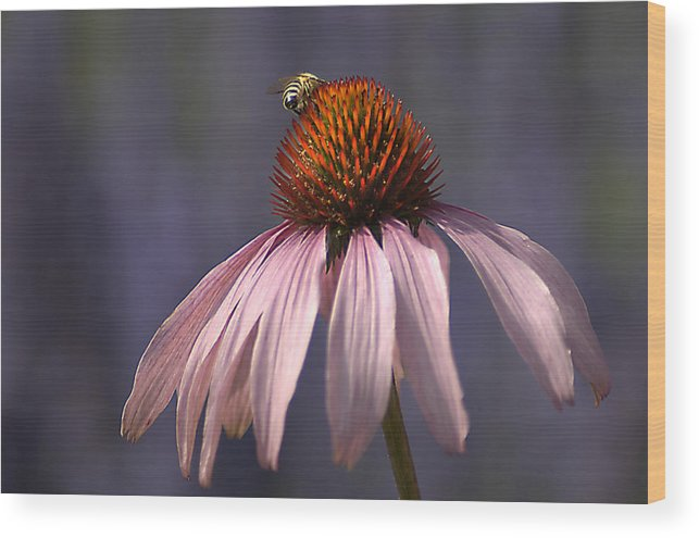 Insect Wood Print featuring the photograph Flower And Bee by Bob Van Den Berg Photography