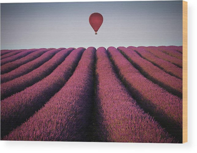 Shadow Wood Print featuring the photograph Flying High by Paul Baggaley