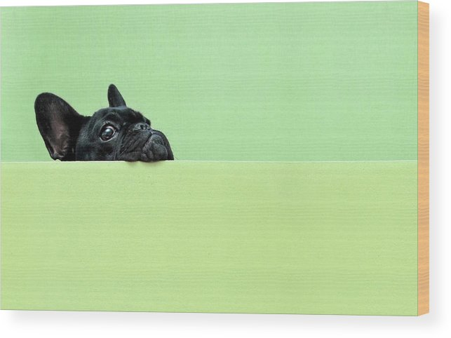 Pets Wood Print featuring the photograph French Bulldog Puppy by Retales Botijero