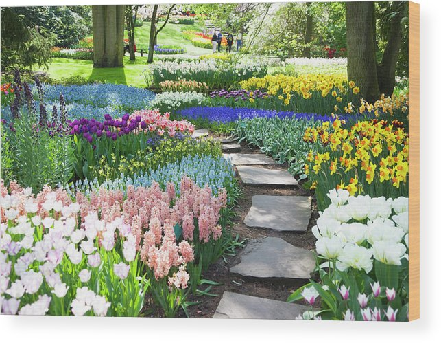 Flowerbed Wood Print featuring the photograph Garden Flowers 53 Xxxl by Lya cattel