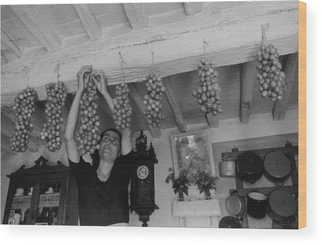 Hanging Wood Print featuring the photograph Hanging Tomatoes by Haywood Magee