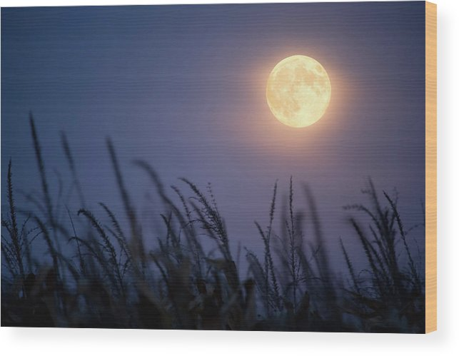 Sky Wood Print featuring the photograph Harvest Moon by Jimkruger