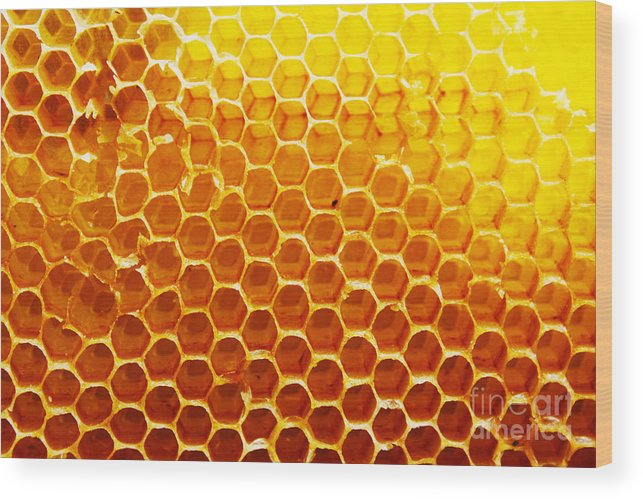 Bee Wood Print featuring the photograph Honey Beehive by Val Lawless