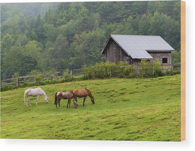 Horse Farm Wood Print featuring the photograph Horse Farm by Brenda Petrella Photography Llc