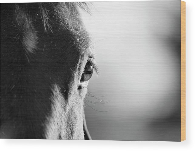 Horse Wood Print featuring the photograph Horse In Black And White by Malcolm Macgregor