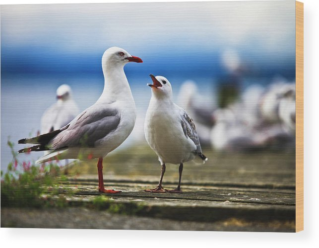 Animal Themes Wood Print featuring the photograph Hungry Gull by Ignacio Hennigs