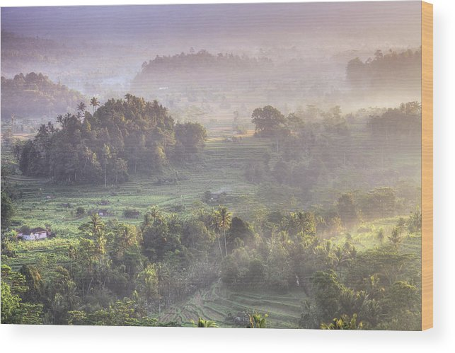 Tranquility Wood Print featuring the photograph Indonesia, Bali, Forest Landscape by Michele Falzone