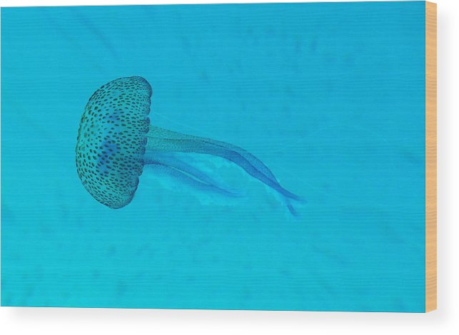 Underwater Wood Print featuring the photograph Jellyfish In Wild by Sir Francis Canker Photography