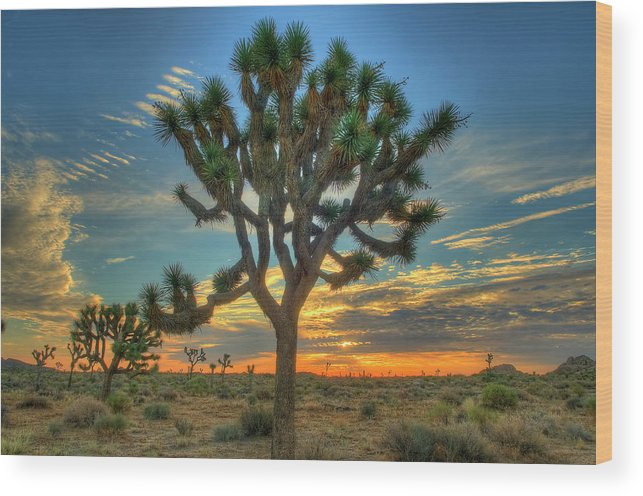 Scenics Wood Print featuring the photograph Joshua Tree At Sunrise by Photograph By Kyle Hammons