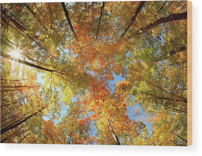 Canopy Wood Print featuring the photograph Langlade County Canopy by Todd Klassy