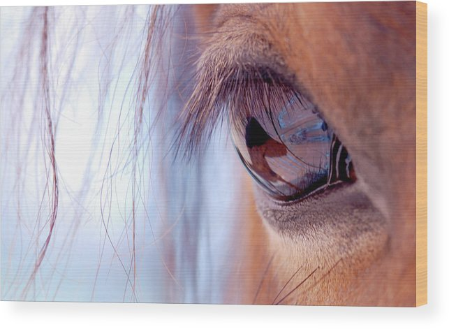 Horse Wood Print featuring the photograph Macro Of Horse Eye by Anne Louise Macdonald Of Hug A Horse Farm