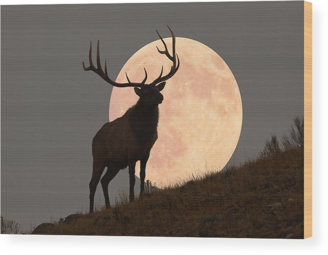 Horned Wood Print featuring the photograph Majestic Bull Elk And Full Moon Rise by Mark Miller Photos