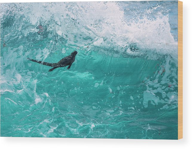 Animals Wood Print featuring the photograph Marine Iguana Surfing Wave by Tui De Roy