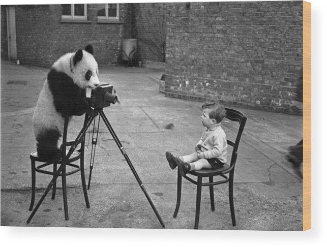 Child Wood Print featuring the photograph Panda Photo by Bert Hardy