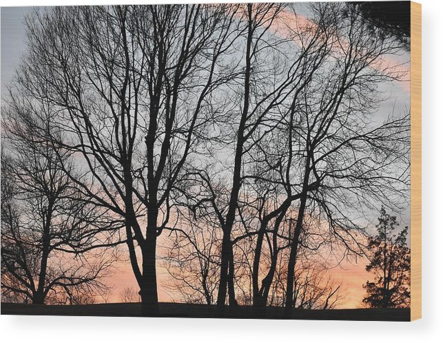 Trees Wood Print featuring the photograph Pink Sky by Cassidy Marshall