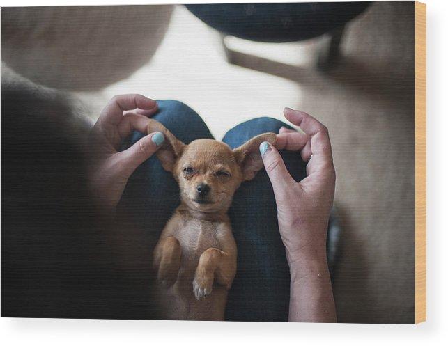 Pets Wood Print featuring the photograph Pov - Pets by Jono Winnel