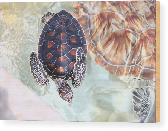Underwater Wood Print featuring the photograph Sea Turtle by Alyssa B. Young
