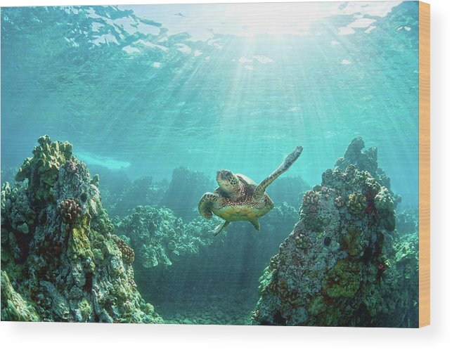 Underwater Wood Print featuring the photograph Sea Turtle Coral Reef by M.m. Sweet