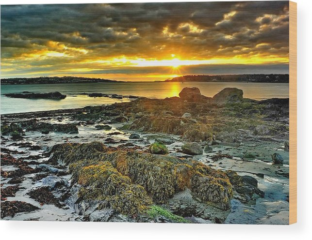 Scenics Wood Print featuring the photograph Seaweed Sunrise by Frameworthyfotography By Thadd