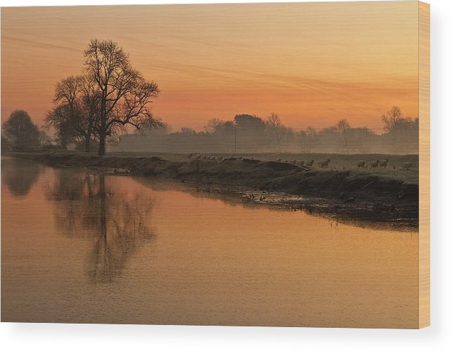 Scenics Wood Print featuring the photograph Sheep Sunrise by Paulscreen