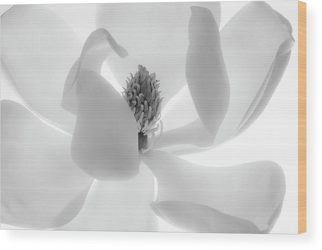 White Background Wood Print featuring the photograph Simple Elegence by Susan Fan-brown