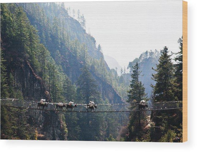 Himalayas Wood Print featuring the photograph Sopkios In The Solo Khumbu Valley by Foto Por Juan Cristóbal Hurtado.